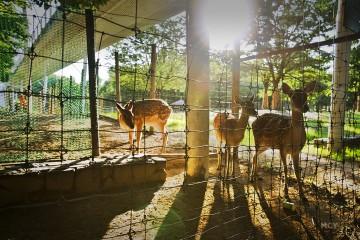서울숲 사슴들