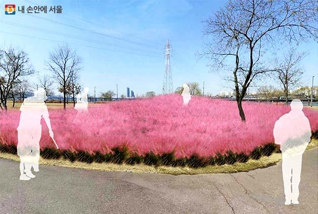 핑크뮬리 정원 개화 예상도