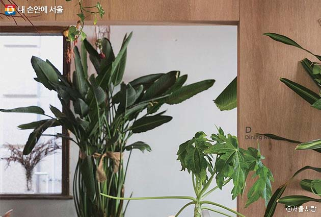 일상에서 쉽게 만날 수 없는 희귀 식물과 얄대지방 식물 등이 카페 곳곳을 장식한 벌스 하우스