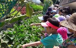 프로그램에 참여한 어린이들이 식물을 관찰하고 있다.