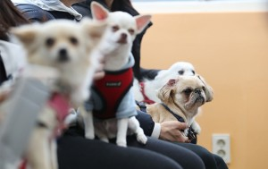 10월 매주 일요일마다 월드컵공원과 보라매공원에서 '반려동물교실'이 열린다.