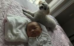 아이는 출생신고를, 반려견은 동물등록제 신고를 마쳤다