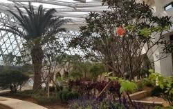 서울식물원 온실 속 지중해 식물들