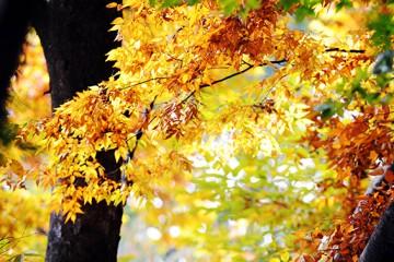 3일 '남산둘레길' 걸으면 무료 촬영, 가을차 드려요!