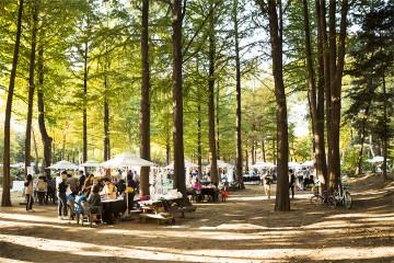 양재 시민의숲 가을축제