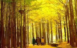 서울숲 단풍길