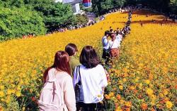 올림픽공원 들꽃마루