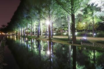 가을 깊어가는 밤, 서울숲 거울연못