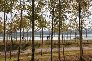 자작나무숲 사이로 펼쳐진 한강자전거길
