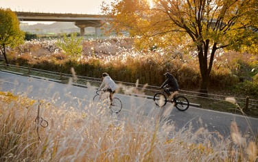 갈대 가득한 안양천을 따라 라이딩을 즐기는 시민들