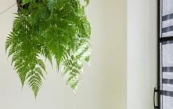 미세먼지 흡착력 우수한 식물