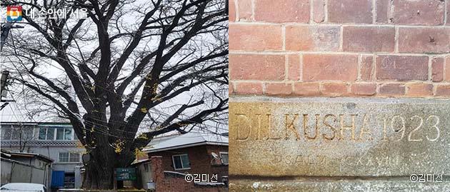 앨버트 테일러 부부가 살았던 역사적인 집 '딜쿠샤'에 자리한 500년 된 은행나무(좌)와 '기쁜 마음의 궁전'이란 뜻의 '딜쿠샤'라 쓰인 정초석(우)