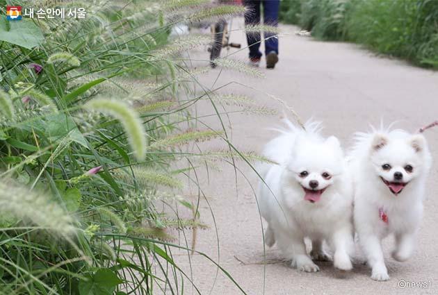 산책하고 있는 강아지 모습