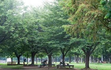 서울시는 29일 노원구 초안산근린공원 내에 '도시숲'을 조성한다. 나무들이 울창한 숲에서 휴식을 취하는 시민들.
