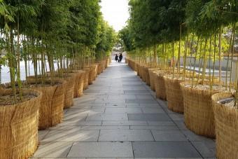 국립중앙박물관 대나무 숲길
