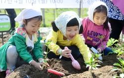 고사리 손으로 텃밭에 모종을 심는 아이들