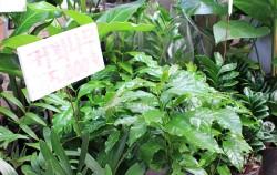 양재동 화훼공판장에서 다양한 식물들을 만날 수 있다