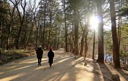 평창 월정사 전나무숲길은 겨울에 찾기 좋은 곳이다. 눈이라도 오면 더 멋지겠지만 겨울 해가 길게 내려앉은 오후도 좋다.