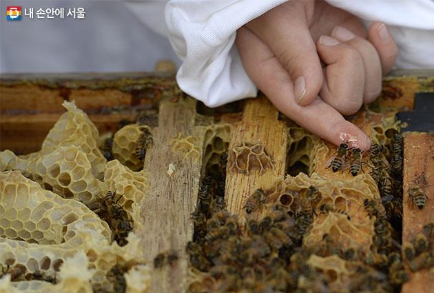 서울시농업기술센터가 양봉 전문인력 양성 프로그램을 3월부터 운영한다