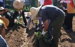 밭 만들기 재배실습