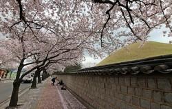 봄꽃 여행의 대표 명소 경주는 서울에서 고속열차로 2시간이면 닿을 수 있다