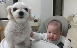 아기와 반려견