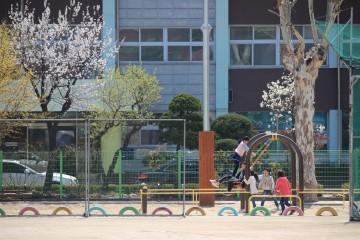 우리학교에도 봄이 왔어요