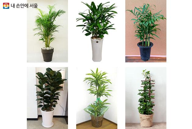 사진 속 식물은 왼쪽상단부터 시계방향으로 아레카 야자, 관음죽, 대나무(세이브리찌) 야자, 헤데라(아이비), 드라세나데레멘시스, 인도 고무나무