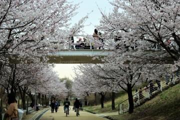 화사한 벚꽃길을 걸어봐요!