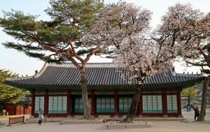 창경궁은 고궁 공원으로 불릴 만큼 서울 도심 한복판에 울창한 숲을 자랑한다