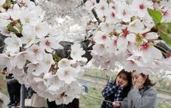 벚꽃 아래 사진을 찍는 사람들
