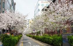집 주변 활짝 핀 봄꽃들. '서울의 아름다운 봄꽃길 160곳'을 통해 우리 동네 봄꽃길을 확인할 수 있다.