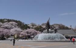 벚꽃이 활짝 핀 국립서울현충원