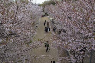 서울숲의 꽃비