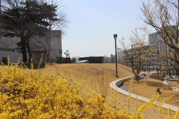 연세대학교 이한열 열사 언덕에 찾아 온 봄