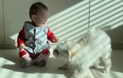 아기와 반려견 필수 안전용품! 어떤 게 있을까?