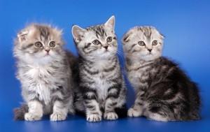 '반려동물 돌봄문화 시민학교'에서는 반려견·반려묘 돌봄을 위한 내용들을 강의한다.
