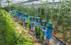 어린이들이 농산물 수확을 체험하고 있다