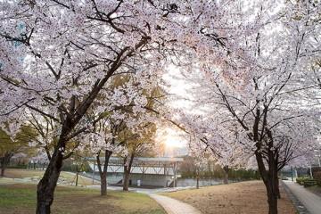 화(花)려한 나들이 즐기고 싶다면 지금 바로 서울숲