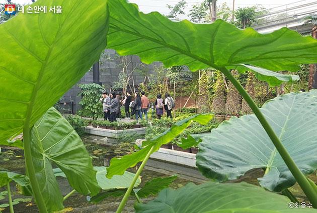 서울식물원 온실을 찾은 시민들의 여유로운 모습
