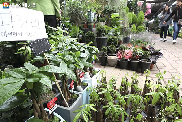 공기정화식물 직거래장터가 서울광장에 4월 9~10일 열린다. 사진은 양재 꽃시장