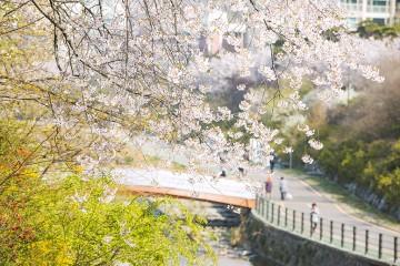 우이천에서 맞이하는 봄