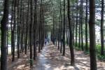경춘선숲길2