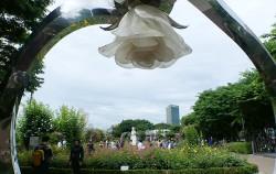서울장미축제가 열린 장미정원 전경