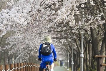벚꽃길따라 즐기는 라이딩