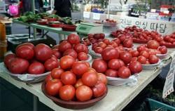 '농부의 시장'에서 만난 토마토. 탐스러운 토마토가 눈길을 끈다