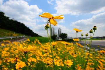 푸른하늘 아래 노랑꽃