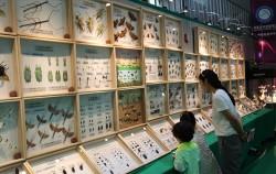 곤충표본 전시를 구경하는 아이들