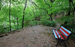 석파정의 산책로 녹색의 여름이 무르익고 있습니다