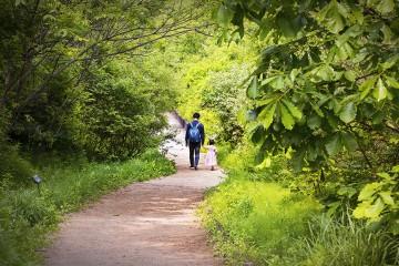 길동생태공원 초여름 풍경